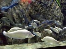 海洋世界吉尼斯世界纪录大全 图库摄影