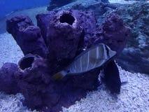 海洋世界吉尼斯世界纪录大全 免版税库存图片