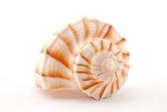 海洋壳 免版税库存图片