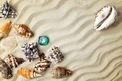 海洋夏天明信片 贝壳与在海滩的沙子毗邻梯度作用 库存照片