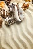 海洋夏天明信片 贝壳与在海滩的沙子毗邻梯度作用 免版税库存图片