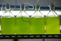 海洋浮游生物文化在实验室 库存照片