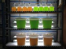 海洋浮游生物文化在实验室 免版税库存照片