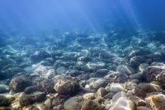 海洋生活水下的岩石阳光,水下的生活 免版税图库摄影
