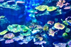 海洋生活水族馆在曼谷 库存照片