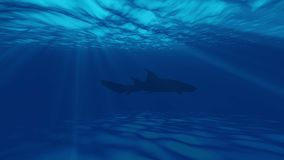 海洋的动画水下与鱼 股票录像