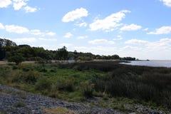 海洋的海岸长满与草,生态上干净的区域 免版税库存照片