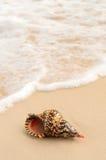 海洋贝壳通知 免版税库存图片