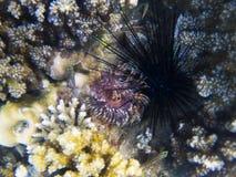 海洋野孩子和珊瑚虫 异乎寻常的海岛岸浅水区 热带海滨风景水下的照片 库存图片