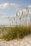 海洋风景视图 库存图片