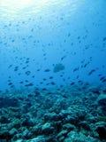 海洋 库存照片
