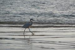 海洋 atlantes 跑在海滩沙子的魔术波浪 图库摄影