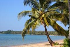 海洋palmtree视图 免版税库存照片