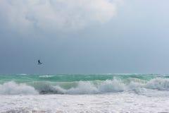 海浪。大波浪。浪潮。 免版税图库摄影