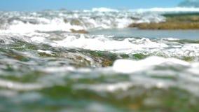 海浪洗涤在棕色岩石慢动作的绿色海草 影视素材