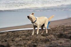 海浪狗 库存图片