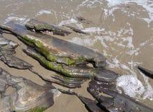海浪被佩带的地层 库存图片
