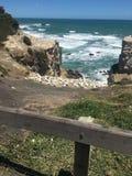 海海岸线muriwai海滩 免版税库存照片