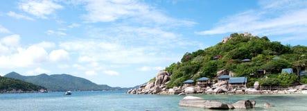 海海滩和河树 库存图片