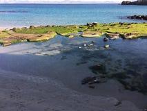 水海海滩大陆春天 免版税库存图片