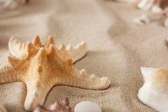 海海滩沙子和贝壳背景、自然海滨石头和海星 免版税库存图片