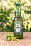 海涅肯储藏啤酒 图库摄影