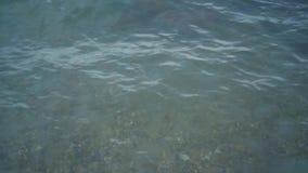 海清楚的水 搏动在海水的许多水母 股票录像