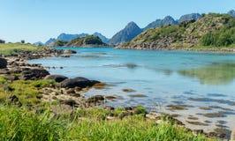 海湾、石头和绿草在夏天, Arsteinen海岛, Lofoten群岛,挪威的绿松石水 免版税库存图片