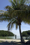 海湾中心沼泽地火鸟佛罗里达国家公园状态向美国查看访客 库存照片