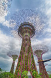 海湾从事园艺新加坡 图库摄影