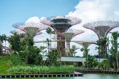 海湾从事园艺新加坡 库存照片