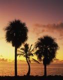 海湾佛罗里达日出 免版税库存照片
