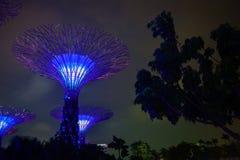 滨海湾公园在新加坡在晚上 免版税库存图片