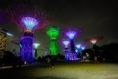 滨海湾公园塔在新加坡在晚上 图库摄影