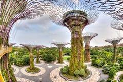 滨海湾公园的偶象Supertree树丛 库存照片