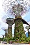 滨海湾公园的Supertree树丛在新加坡 库存照片