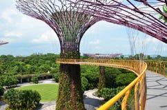 滨海湾公园的Supertree树丛在新加坡 免版税库存照片