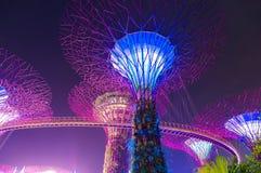 滨海湾公园的Supertree树丛在晚上 新加坡 库存照片