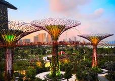 滨海湾公园,新加坡 免版税库存图片