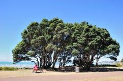 海湾在奥克兰地区,新西兰 免版税库存图片