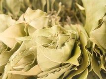 海湾干燥叶子 库存图片