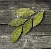 海湾干燥叶子 免版税图库摄影