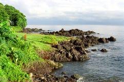 海湾海岸线雄鸭 免版税库存图片