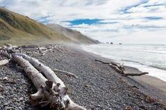 海湾海滩漂流木头血块石渣nz 库存图片