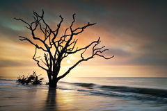 海湾海滩骨头植物学edisto海岛日出围场 库存照片