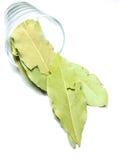 海湾玻璃叶子 库存图片