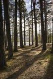 海湾的Garten古苏格兰森林苏格兰的高地的 免版税库存图片