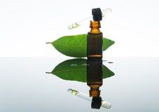 海湾精油,月桂叶油,月桂叶,琥珀色的玻璃瓶,吸管 免版税图库摄影