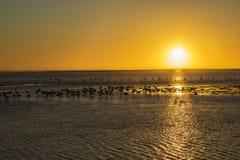 海湾纳米比亚walvis 免版税图库摄影