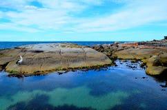 海湾binalong塔斯马尼亚岛 免版税库存照片